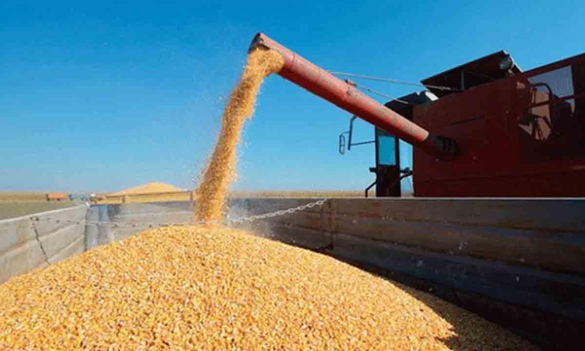 El Gobierno anunció la reapertura parcial de las exportaciones de maíz - La  Brújula 24